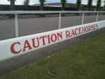 Caution Racehorses at Windsor Race Course