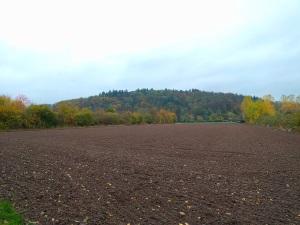wehler-marsh