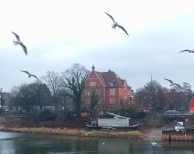 More birds than The Birds plus a beached boat. Random discoveries! 3/365
